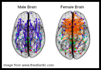 Male-Female-Brain