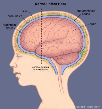 baby-brain-side