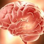p5-brain